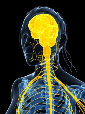 Système nerveux central et périphérique cervico-dorsal