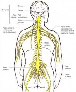 pathophysiology_2