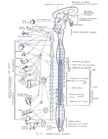 schéma colonne corresp organes